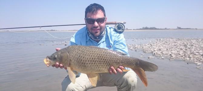 Small Pan, Big Fish – Part 2